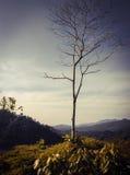 Arbre sur la montagne Photo libre de droits