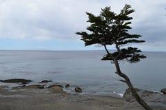 Arbre sur la plage Photo libre de droits