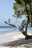 Arbre sur la plage Images libres de droits