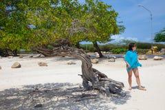 Arbre sur la plage dans Aruba Photo libre de droits