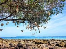 Arbre sur la plage en pierre Photo stock