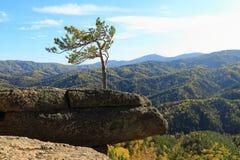 Arbre sur la roche Photo libre de droits