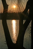 Arbre sur le bord de lac Image libre de droits