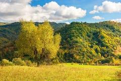 Arbre sur le champ rural en montagnes image stock