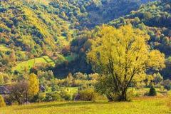 Arbre sur le champ rural en montagnes images stock