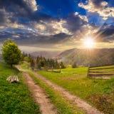 Arbre sur le chemin de flanc de coteau à travers le pré en montagne brumeuse au sunse Image stock