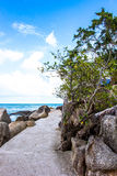 Arbre sur le chemin parmi des pierres en île Photographie stock libre de droits