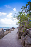 Arbre sur le chemin parmi des pierres en île Photo stock