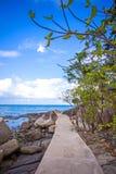 Arbre sur le chemin parmi des pierres en île de Samui Photographie stock libre de droits