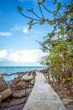 Arbre sur le chemin parmi des pierres en île de Samui Images libres de droits
