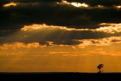 Arbre sur le coucher du soleil Image libre de droits