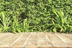 Arbre sur le fond en bois Image libre de droits