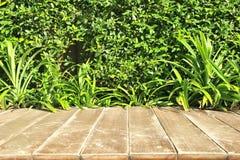 Arbre sur le fond en bois Photographie stock libre de droits