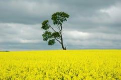 Arbre sur le jaune Images stock