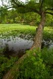 Arbre sur le lac 3512 Image stock