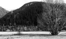 Arbre sur le rivage d'un lac de montagne Images libres de droits