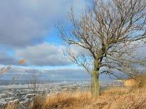 Arbre sur le rivage de broche de Curonian en hiver, Lithuanie Images libres de droits