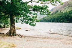 Arbre sur le rivage du lac supérieur, Glendalough, Irlande Photographie stock libre de droits