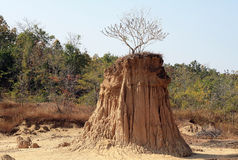 Arbre sur Na NOI de vacarme de sao de pilier de sol dans la province de Nan, Thaïlande Photo libre de droits