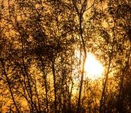 Arbre sur un fond de beau lever de soleil Photographie stock libre de droits