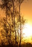 Arbre sur un fond de beau lever de soleil Image stock