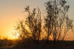 Arbre sur un fond de beau lever de soleil Photo libre de droits