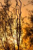Arbre sur un fond de beau lever de soleil Image libre de droits