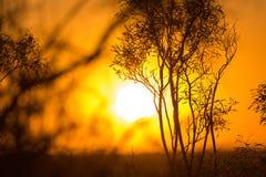 Arbre sur un fond de beau lever de soleil Photographie stock