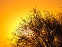 Arbre sur un fond de beau lever de soleil Images libres de droits