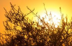 Arbre sur un fond de beau lever de soleil Photo stock