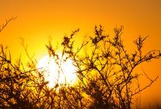 Arbre sur un fond de beau lever de soleil Photos stock