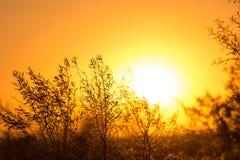 Arbre sur un fond de beau lever de soleil Images stock