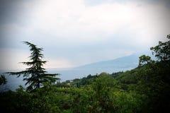 Arbre sur un fond des montagnes Photographie stock libre de droits