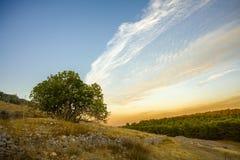 Arbre sur une colline Photo libre de droits