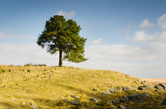 Arbre sur une colline Images libres de droits