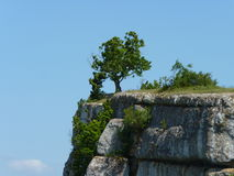 Arbre sur une falaise Photo stock