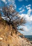 Arbre sur une falaise contre le ciel Photo stock