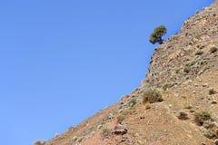Arbre sur une montagne. Image libre de droits