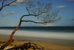 Arbre sur une plage images libres de droits