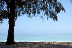 Arbre sur une plage tropicale merveilleuse Images libres de droits