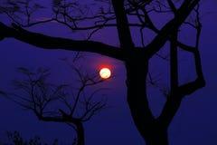 arbre surréaliste silhouetté scénique de coucher du soleil Image libre de droits