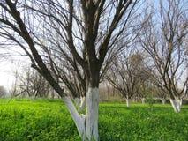 Arbre, tige, bois, nature, blanc peint dans le domaine vert Image libre de droits