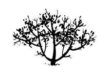Arbre tiré par la main, silhouette de buisson Illustration d'encre d'isolement sur le fond blanc illustration stock