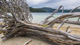 Arbre tombé à la banque du lac en montagnes photo libre de droits