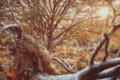 Arbre tombé au coucher du soleil photo stock
