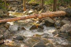 Arbre tombé au-dessus de rivière de Merced en parc de Yosemite images stock