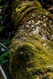 arbre tombé couvert de mousse images libres de droits