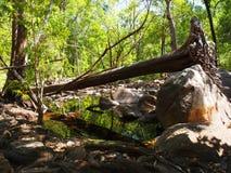 Arbre tombé dans l'extrémité supérieure, Australie Photographie stock