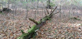 Arbre tombé dans la forêt photographie stock