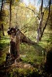 Arbre tombé dans la forêt photographie stock libre de droits